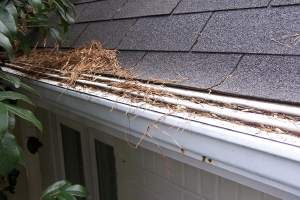 Debris on gutter guard tray