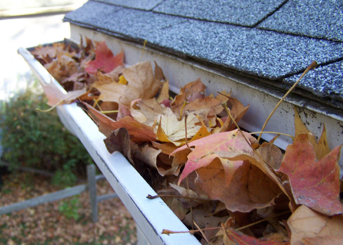leaves blocking gutters