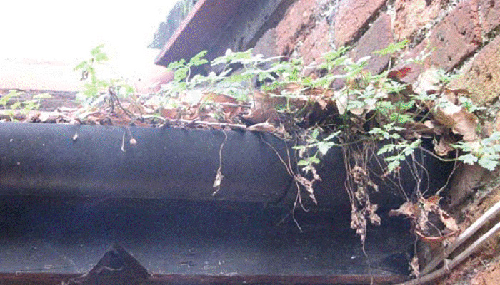 types of debris in gutters